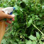 Descubra como a Calda Sulfocálcica Ajudará no Controle de Pragas e Doenças