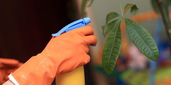 calda sulfocálcica : inseticidas-naturais