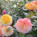 Aprenda a Plantar Flores Orgânicas e Ter uma Horta Mais Colorida e Saudável