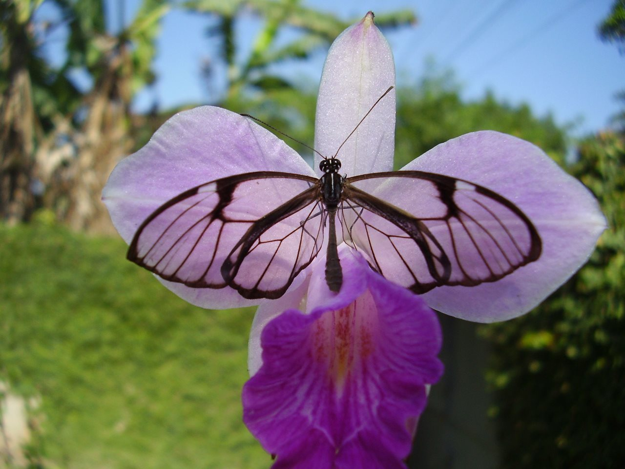 como plantar flores : orquídeas