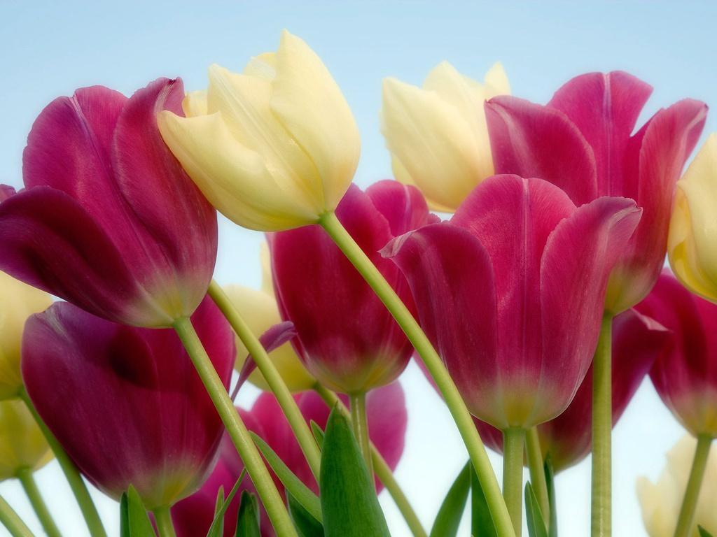 como plantar flores : plantar flores