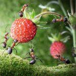 Conheça Mais Inseticidas Naturais Para Proteger Sua Horta Orgânica