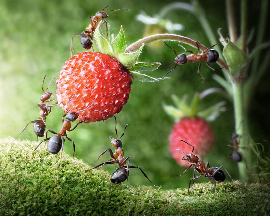 inseticidas naturais