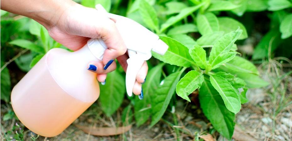 inseticidas naturais:inseticida natural para plantas