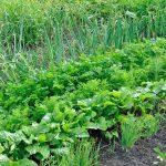 Rotação De Culturas Tornará Seu Cultivo Mais Saudável e Eficiente