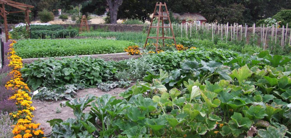 rotação de culturas : alimentos orgânicos
