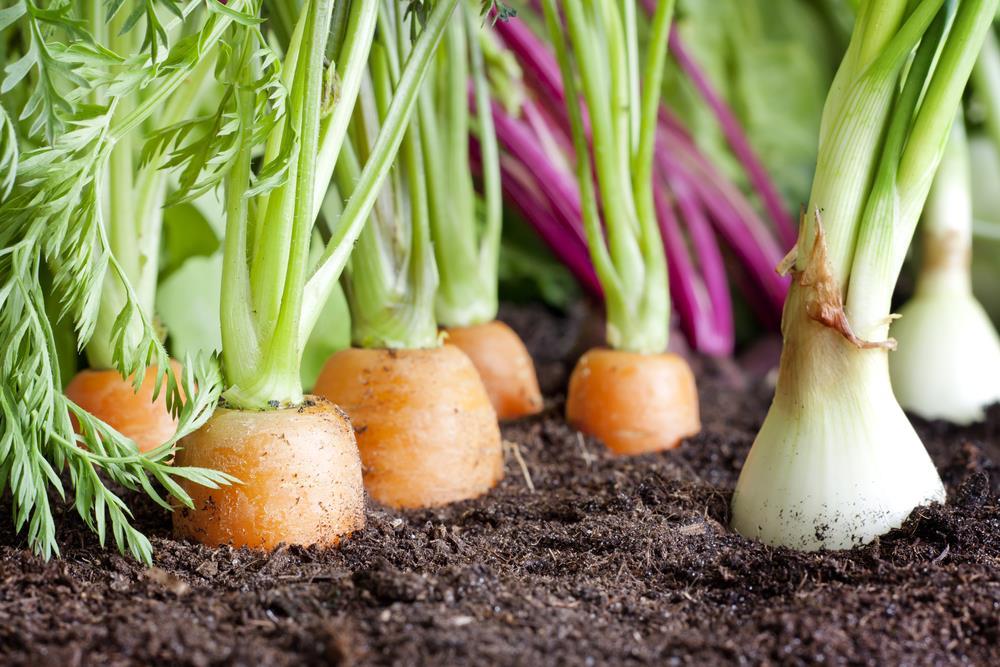 rotação de culturas : horta orgânica