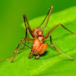 tipos de formiga