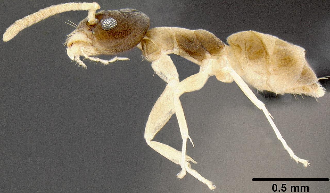 tipos de formiga : como acabar com formigas
