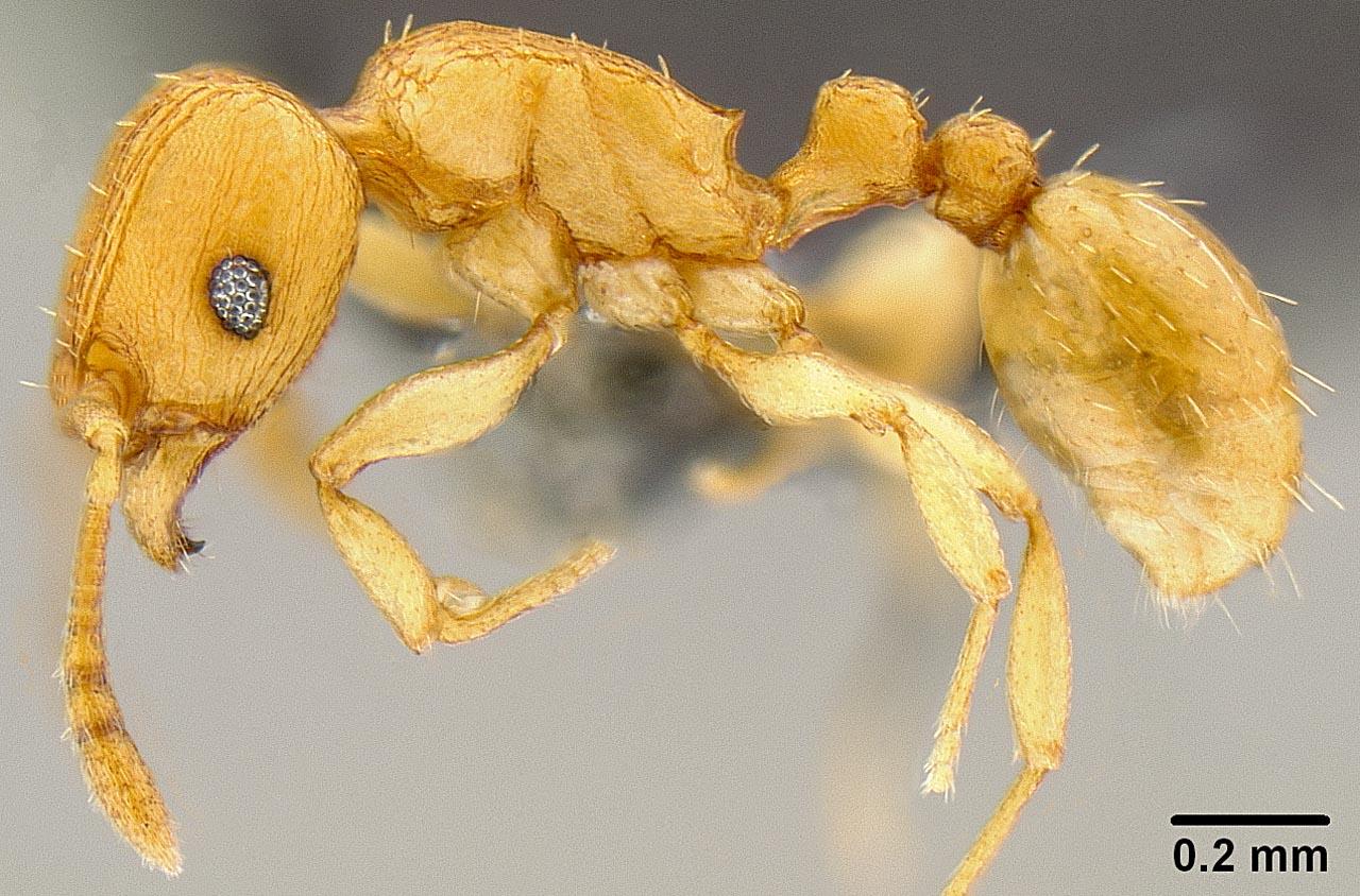 tipos de formiga: como combater formigas