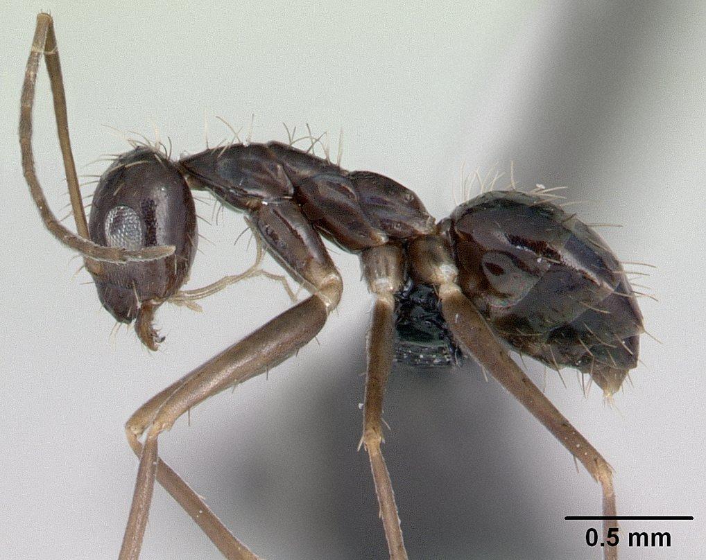 tipos de formiga : como matar formigas