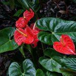 Sombra e Água Fresca: Conheça as Plantas que Não Precisam de Sol