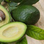 Tudo o que Você Precisa Saber para Plantar Abacate Orgânico a Partir do Caroço do Fruto