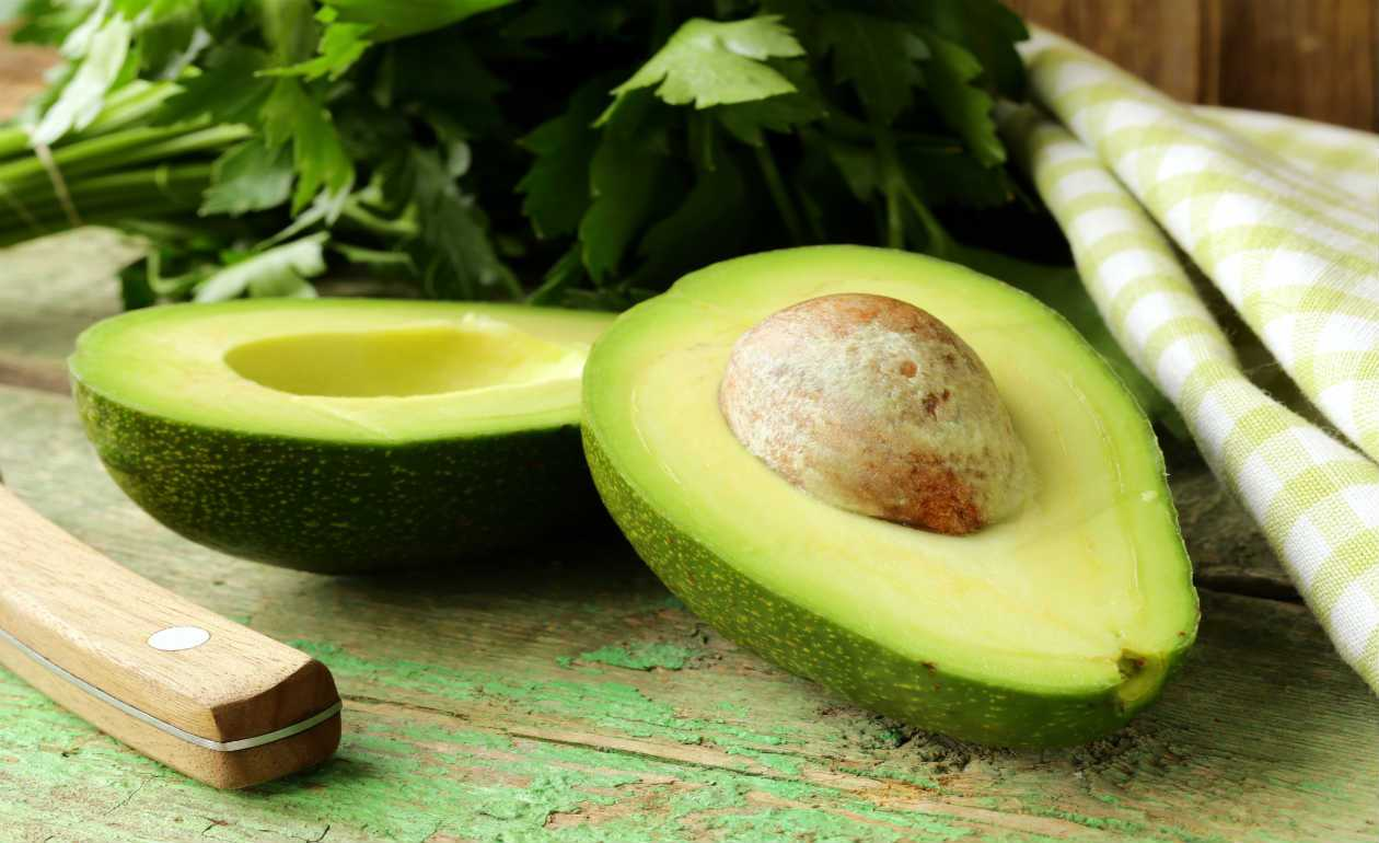 como plantar abacate orgânico : como plantar caroço de abacate