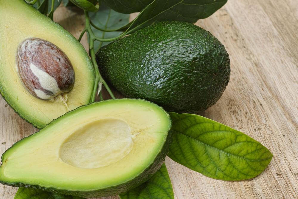 como plantar abacate orgânico