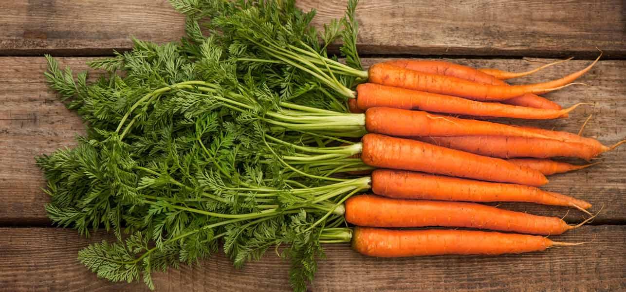 como plantar cenoura orgânica
