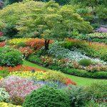 como cultivar plantas ornamentais