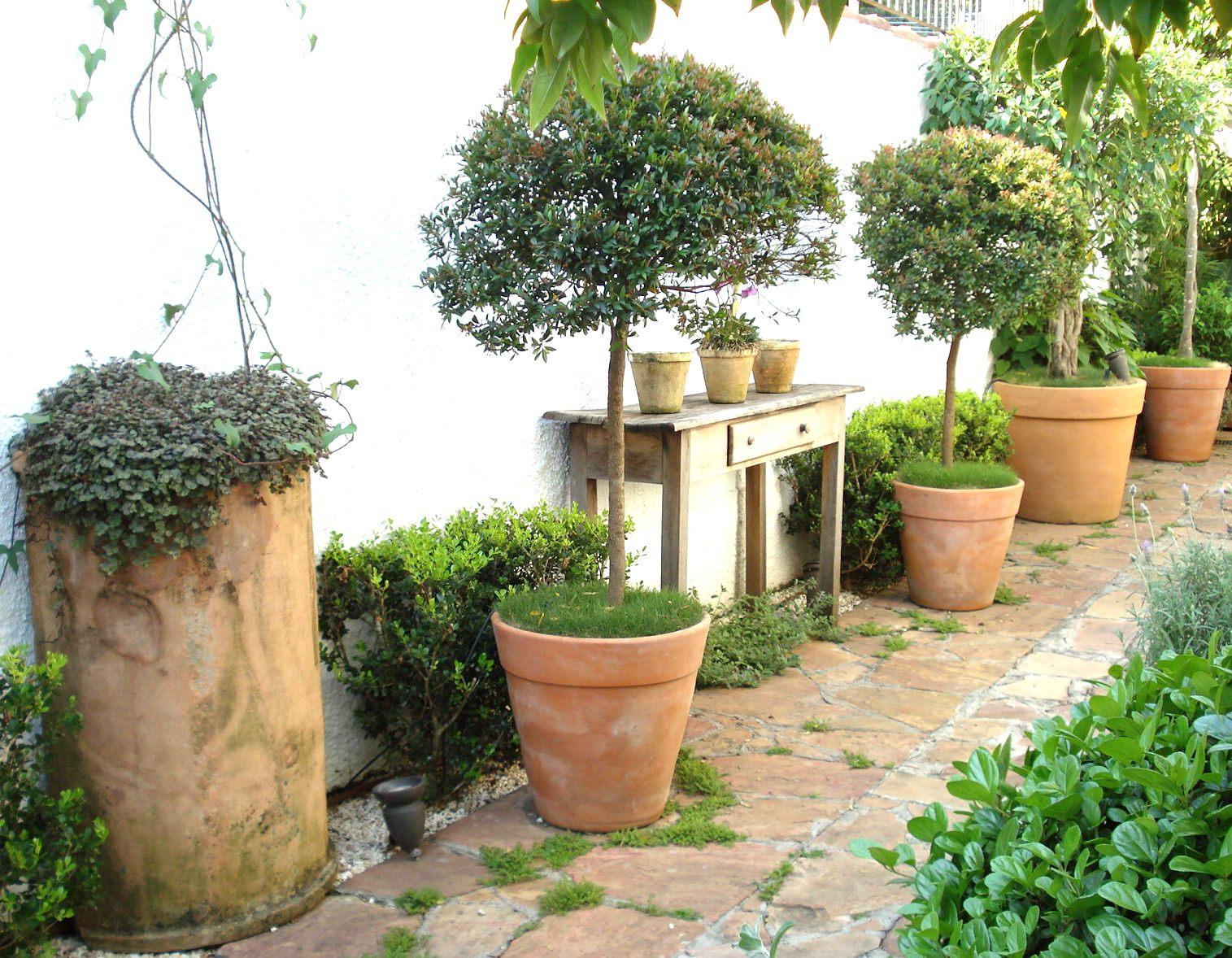 como cultivar plantas ornamentais : plantas ornamentais para vasos