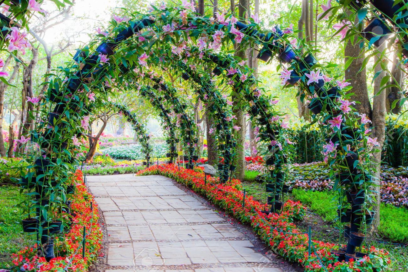 como cultivar plantas ornamentais : plantas ornamentais