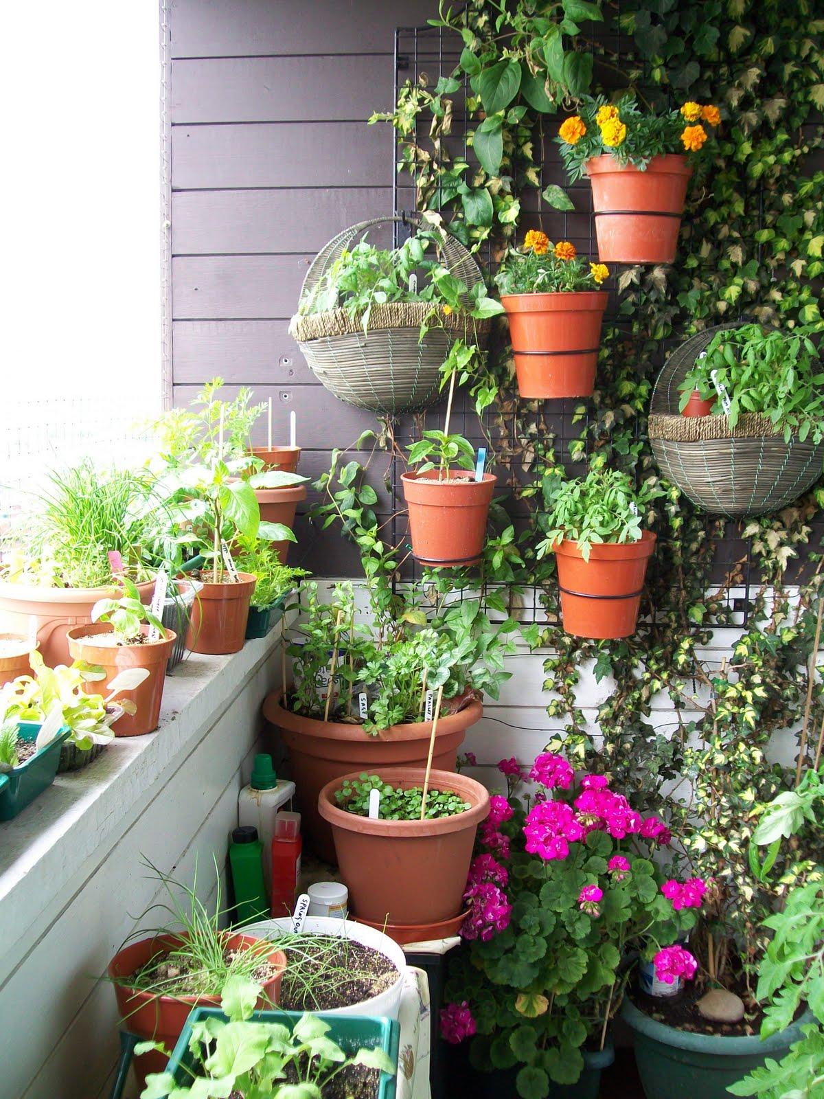 como cultivar plantas ornamentais : vasos de plantas