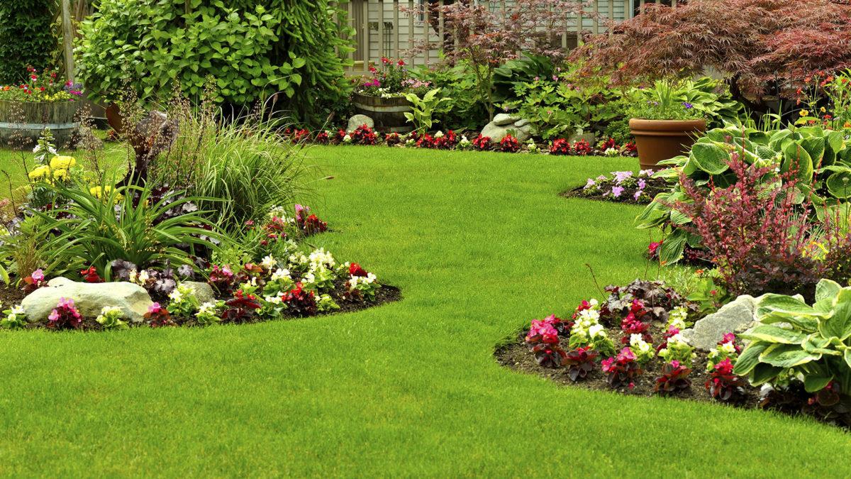 como plantar grama orgânica