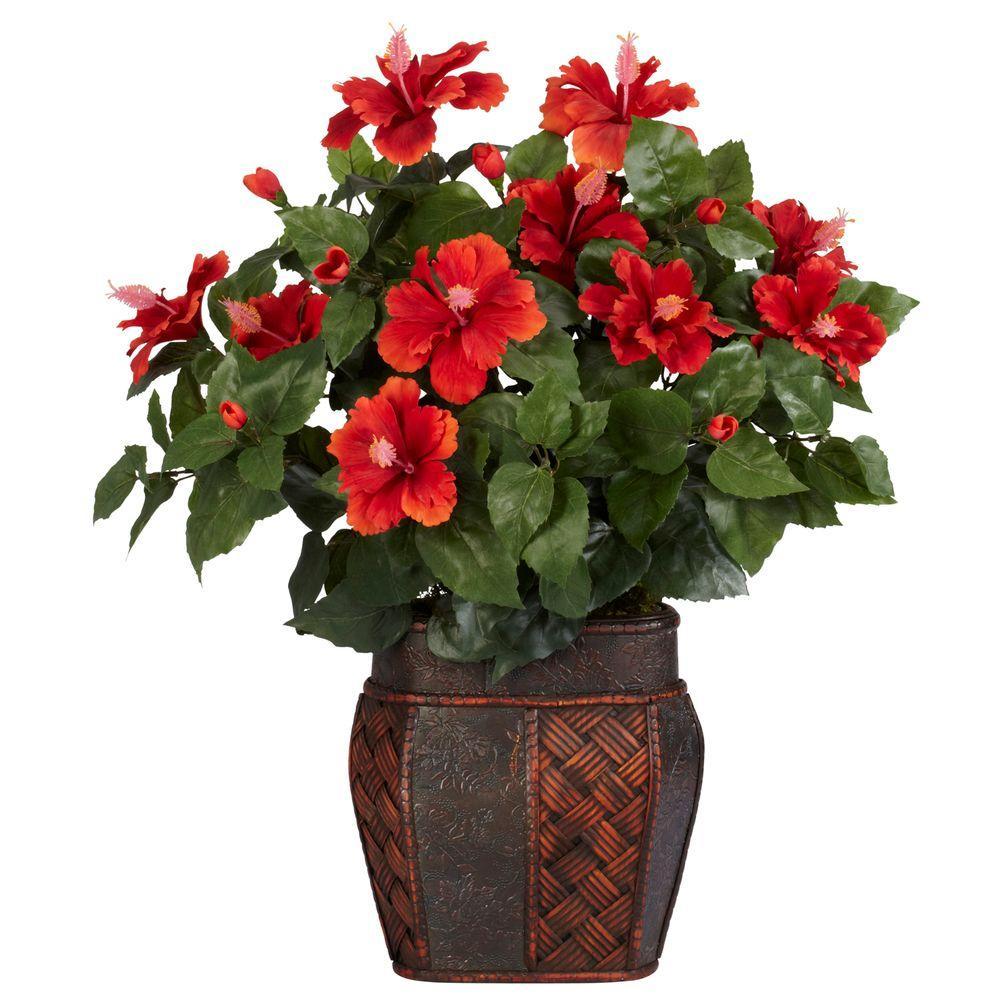 como plantar hibisco : espécies de hibisco