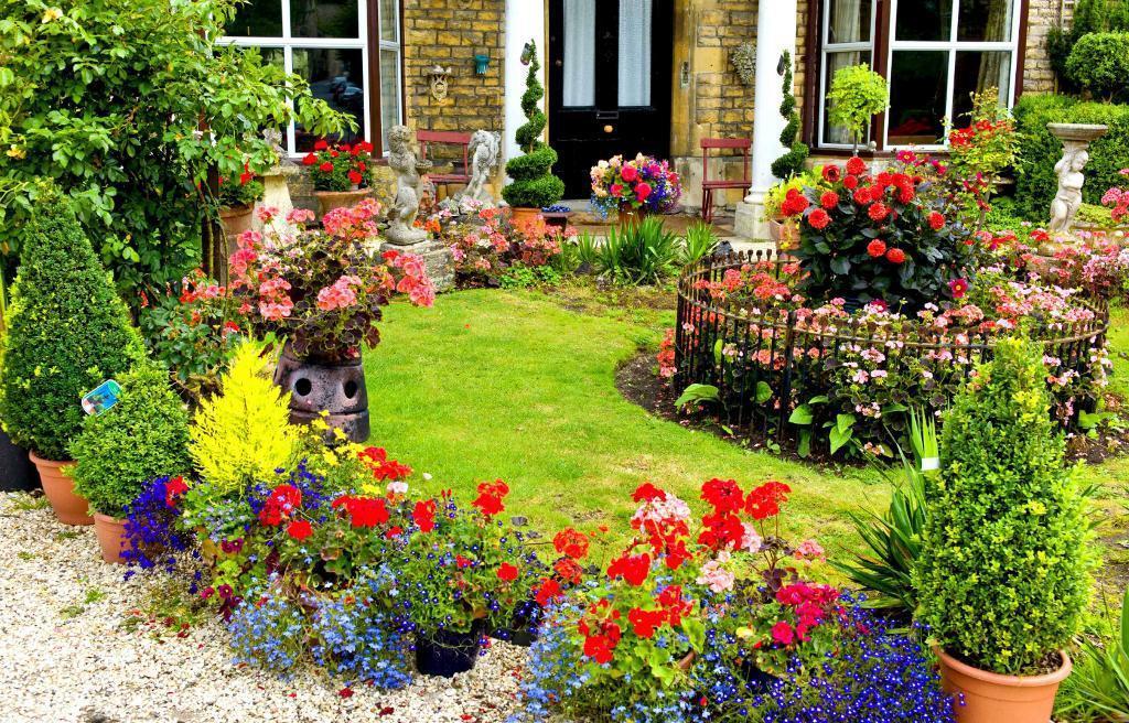 como plantar hibisco : hibisco planta cuidados