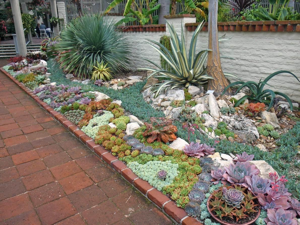 como plantar suculentas orgânicas : jardim de suculentas