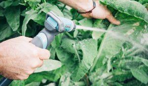 tipos de praga : pragas agrícolas