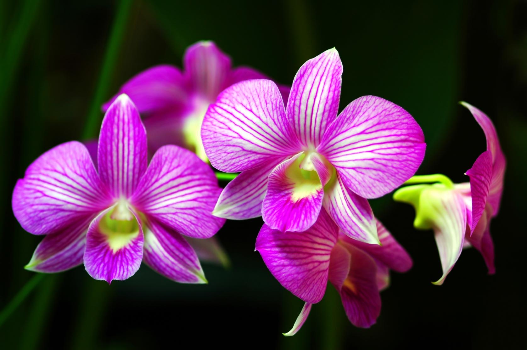 como plantar orquídeas orgânicas : como cuidar de orquídeas