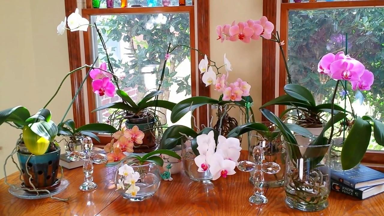 como plantar orquídeas orgânicas : como cultivar orquídeas