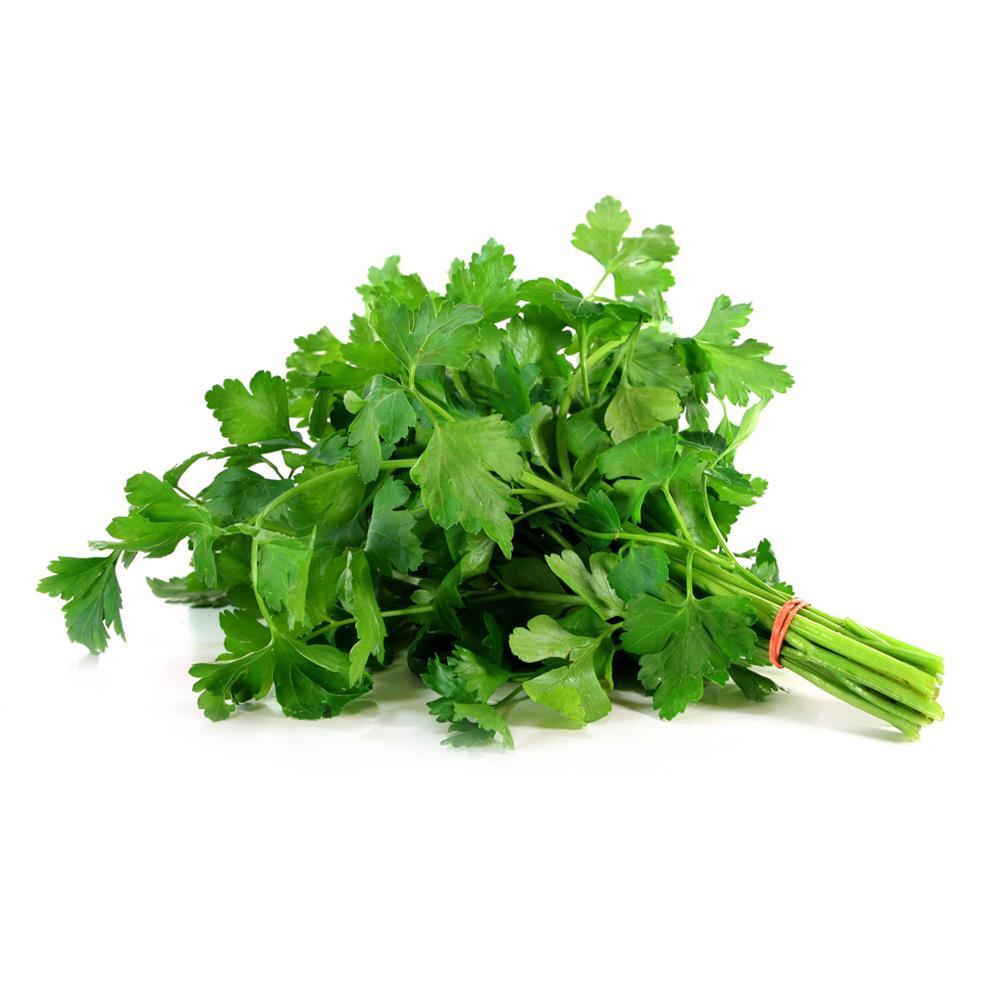 como plantar salsinha orgânica : planta salsa
