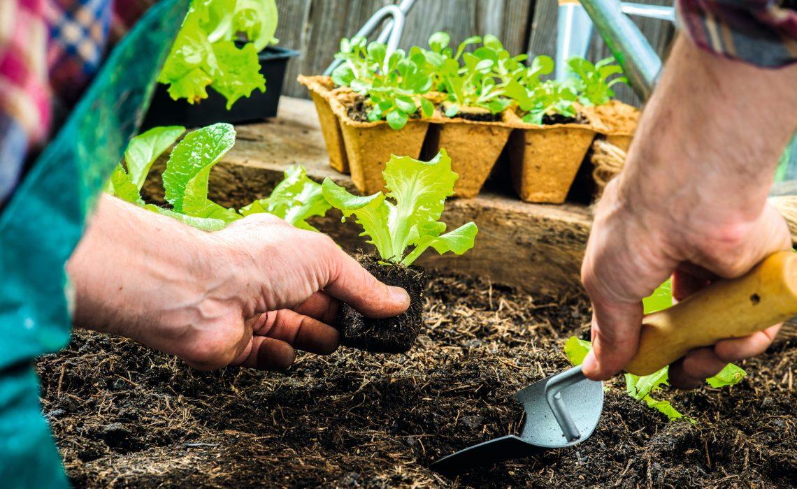 dicas para preparar uma sementeira : como fazer mudas por sementes
