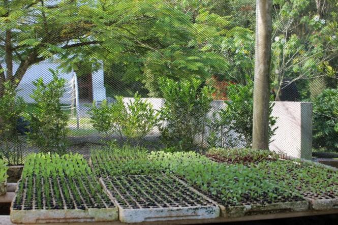 dicas para preparar uma sementeira : cultivo orgânico