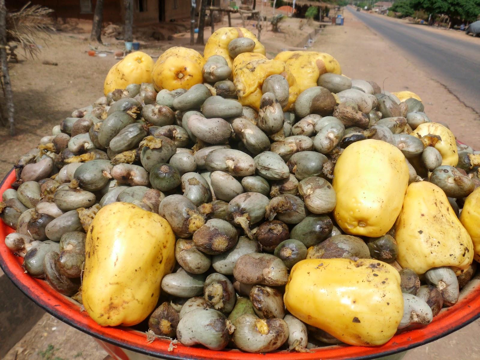 como plantar caju orgânico : tipos de caju