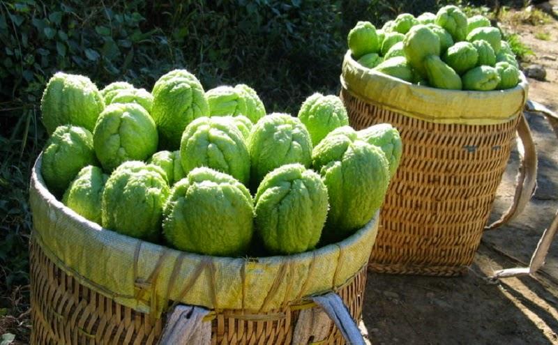 como plantar chuchu orgânico : benefícios do chuchu