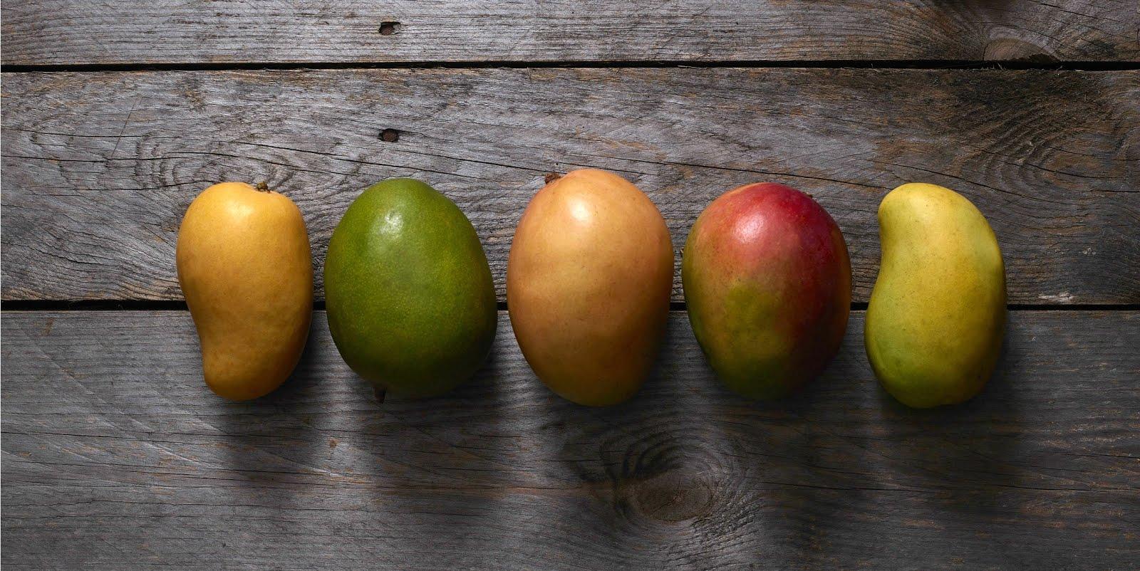 como plantar manga orgânica : mudas de frutas