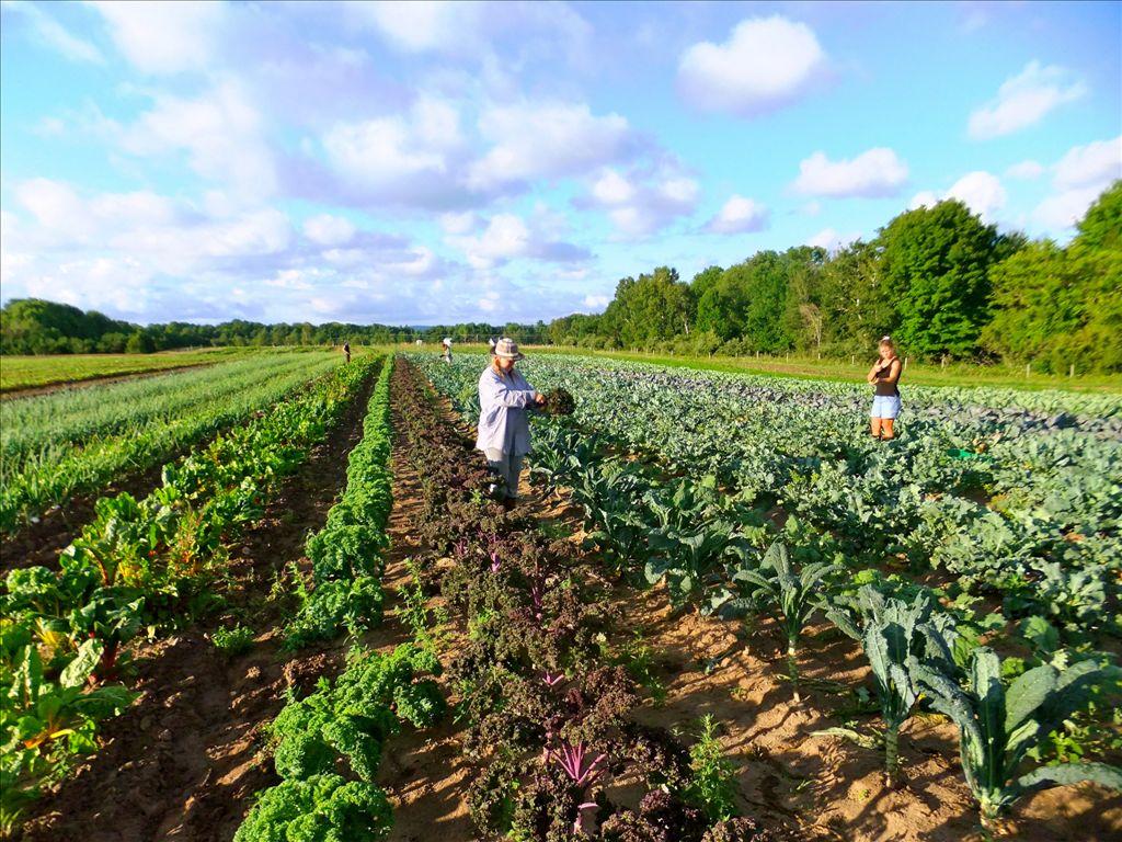 agricultura orgânica no Brasil : alimentos orgânicos