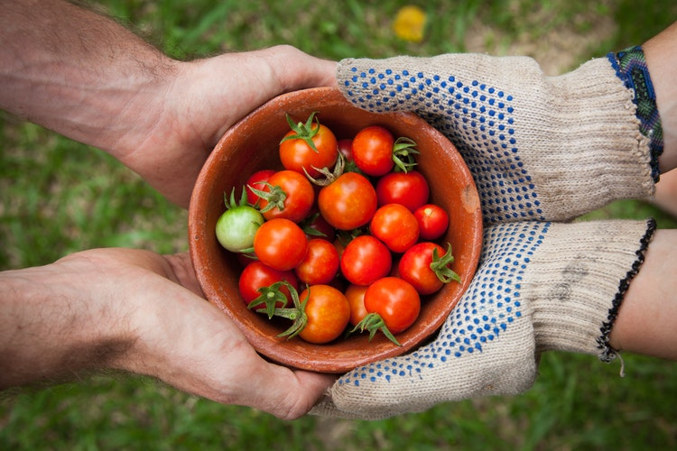 agricultura orgânica no Brasil : horta orgânica