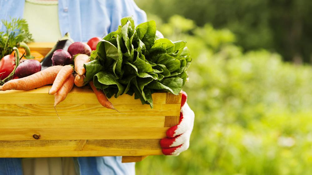 agricultura orgânica no Brasil : produção orgânica