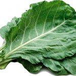 Fácil e Nutritivo: Descubra Como Plantar Couve Orgânica