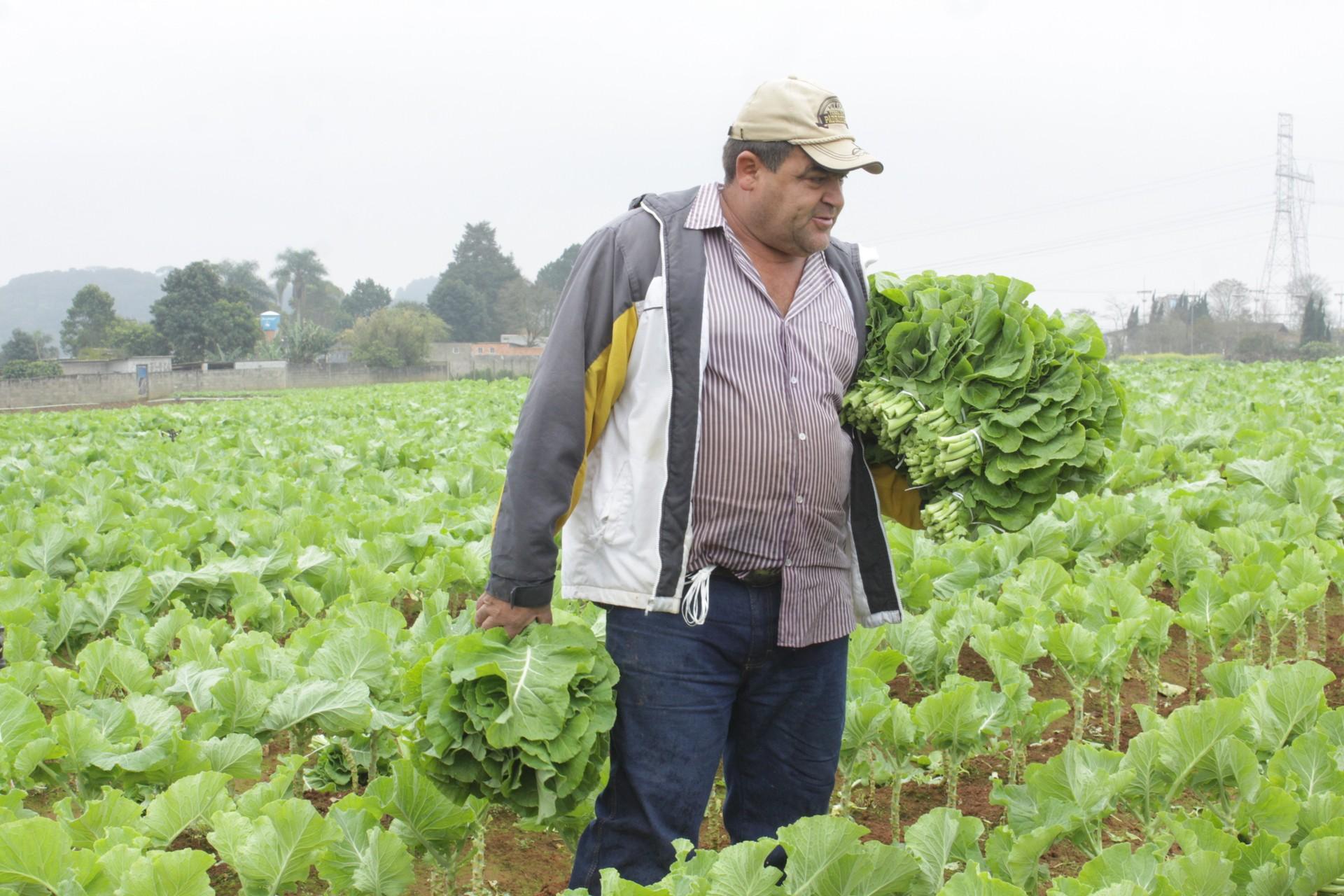 aprenda a plantar couve orgânica : horta orgânica