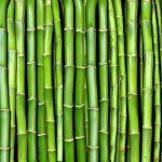 Saiba Tudo Sobre Como Plantar Bambu Orgânico