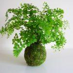 Descubra Como Cultivar Avenca Orgânica e Embelezar Sua Horta Orgânica