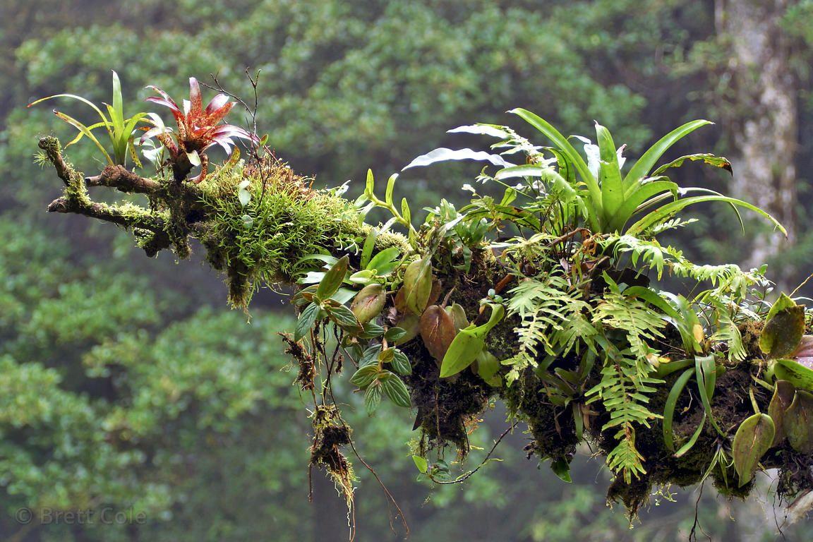 como plantar bromélias : bromélia