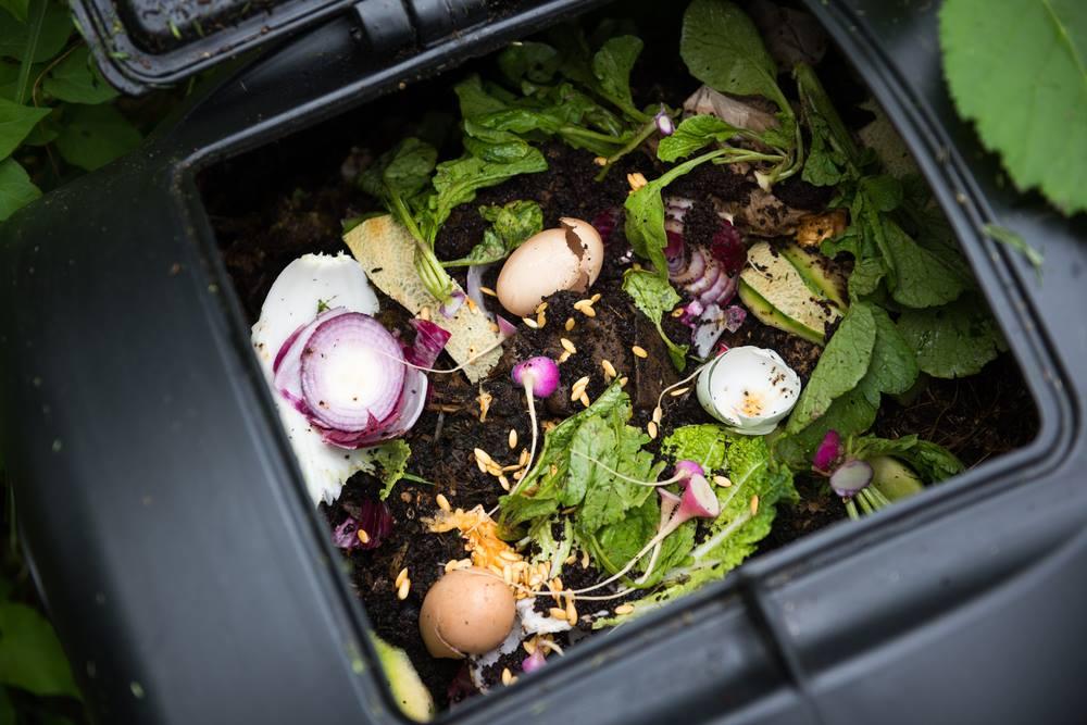 problemas na composteira : compostagem orgânica
