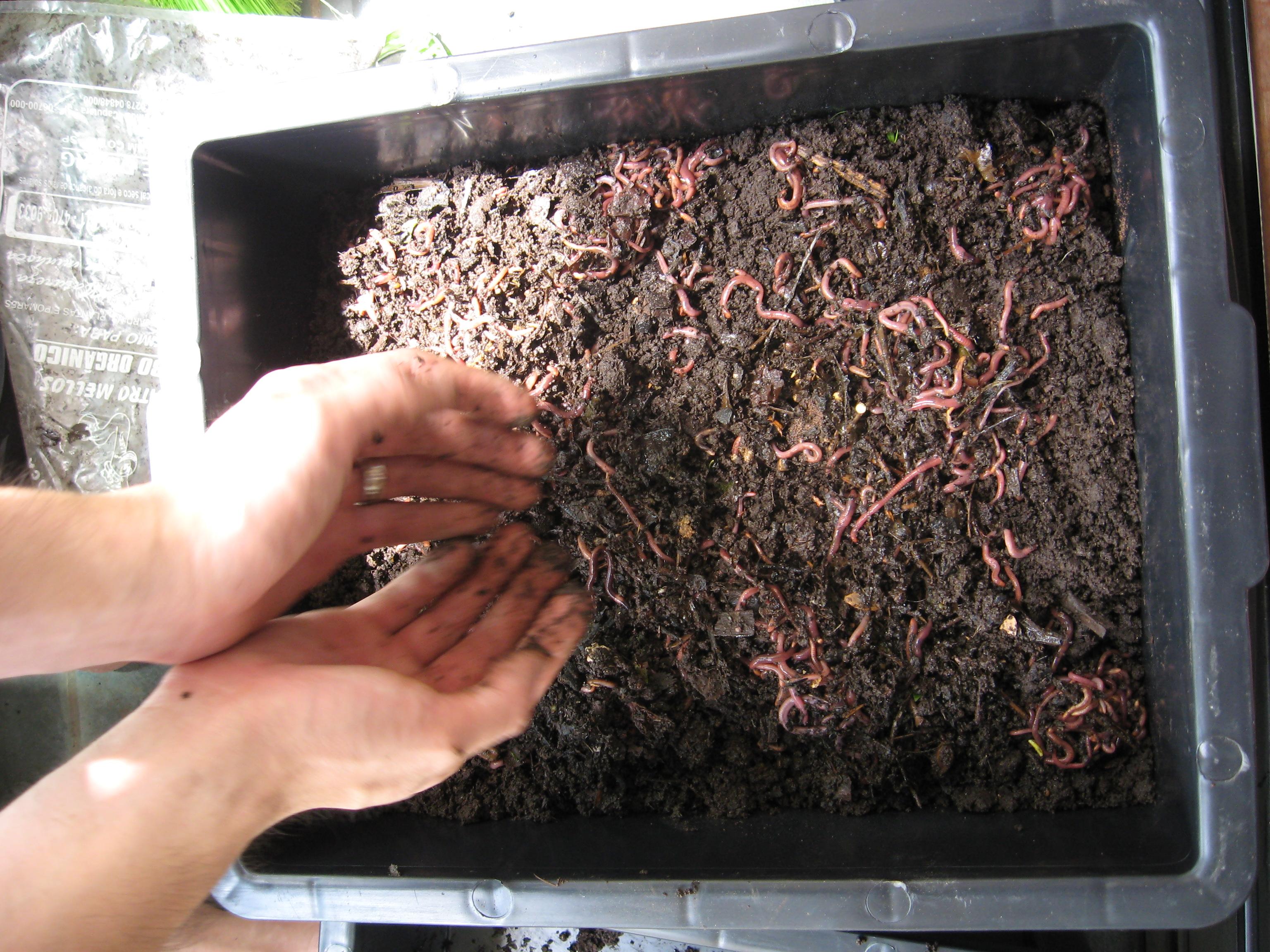 problemas na composteira : minhocário