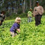 A Importância da Agricultura Familiar no Brasil