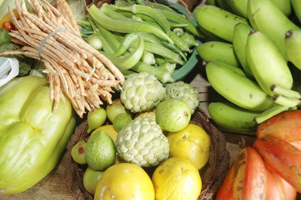 agricultura familiar : agricultura orgânica