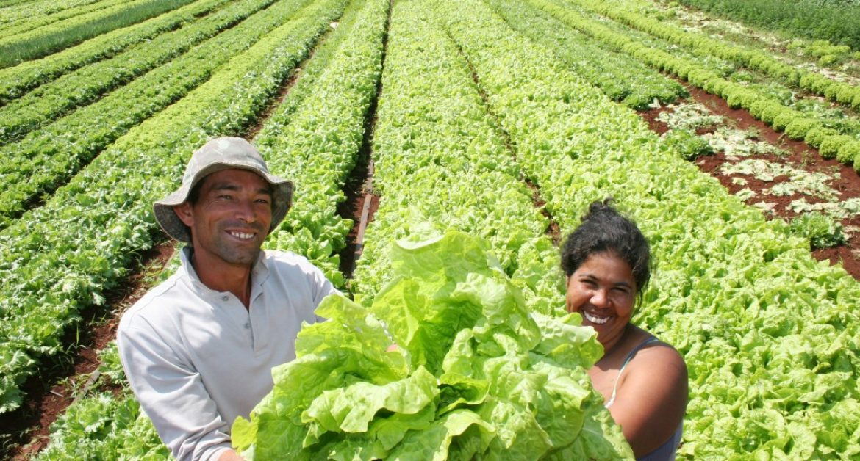 agricultura-familiar : agronegócio